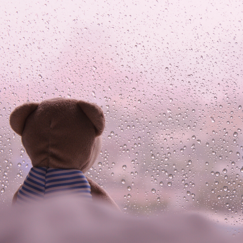 teddy bear looking out of a rainy window, representing isolation